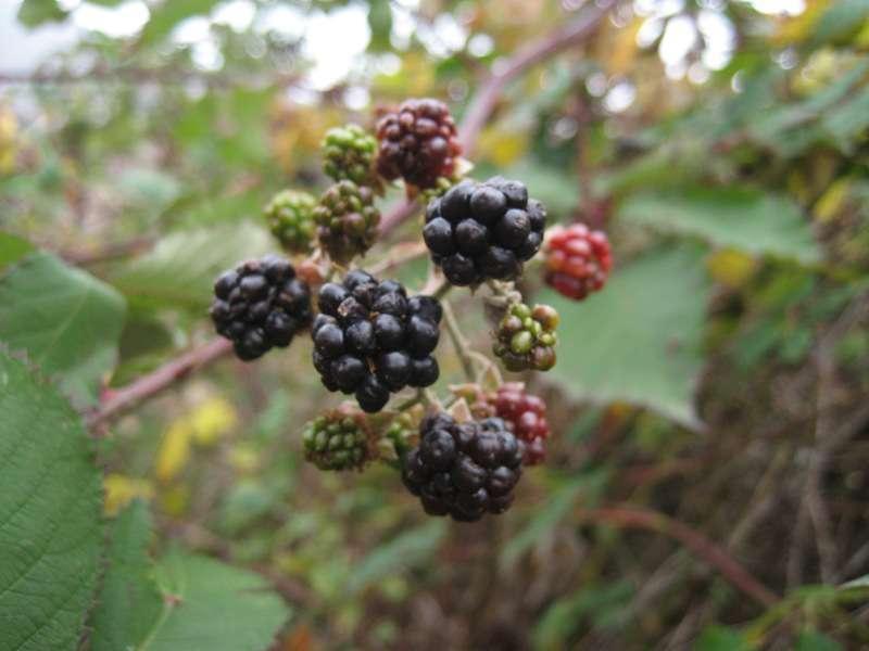 Есен на Китка 3