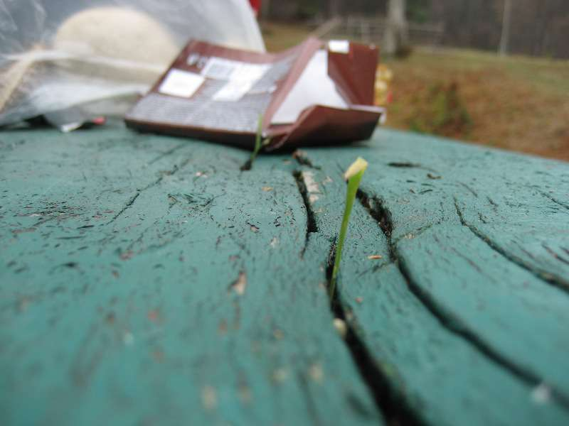 Есен на Китка 17