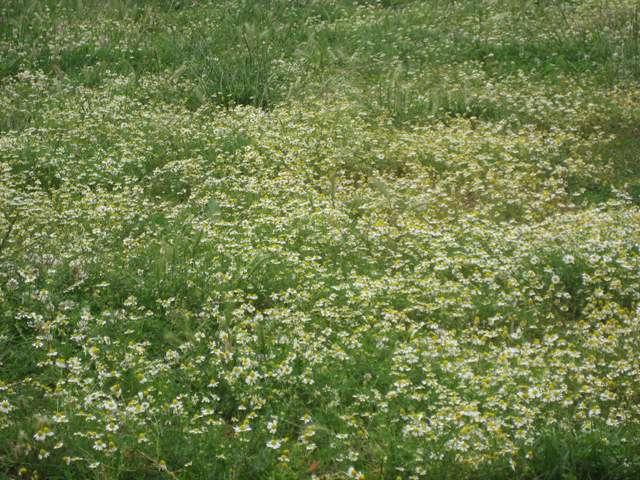 Илинска Планина, Кичево 4 – 05.07.2009 20