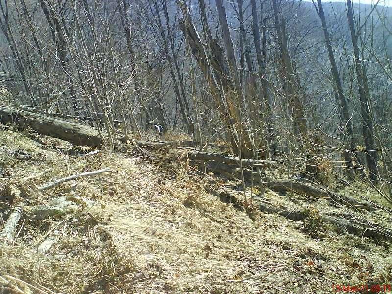 с. Беловиште – Беловишки водопади – Пирибег 13.03.2011 2