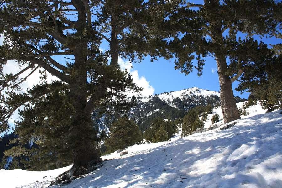 Зимско искачување на Митикас (Олимп) 22-23.03.2013 3